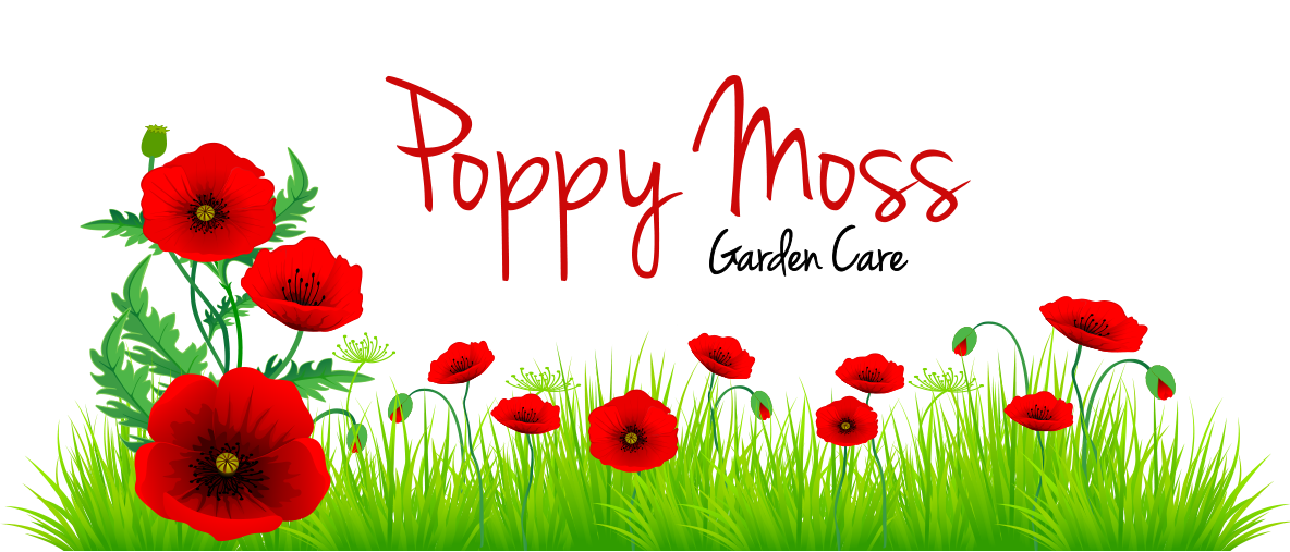 PoppyMossLogo_WelcomeImage